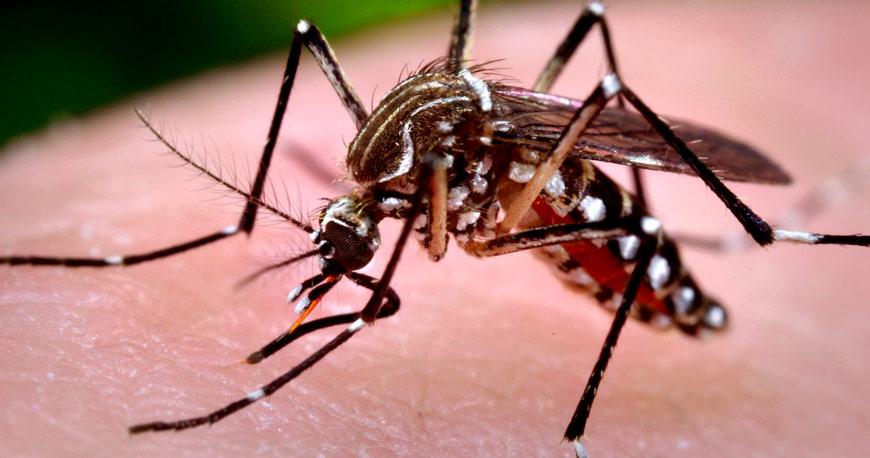 Quais as diferenças entre os sintomas da gripe e da dengue?